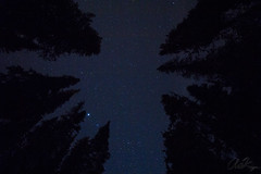 I love shooting stars