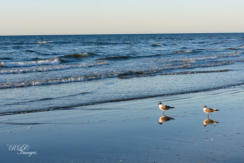 ocean morning seagulls galveston beach gulfofmexico reflections texas