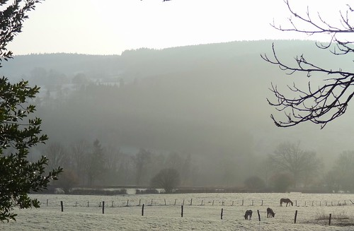 Early in the morning - two horses and a donkey in the Belgian Ardennes