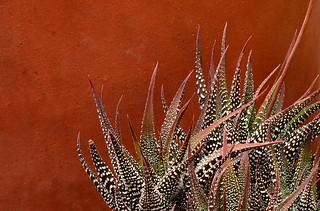 Terra Cotta Succulent