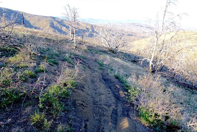 PCT or dirt bike trail?? m552