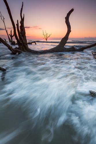 ocean morning beach sunrise dead southcarolina bullisland liveoaks deadtrees lowcountry bullsisland discoversc