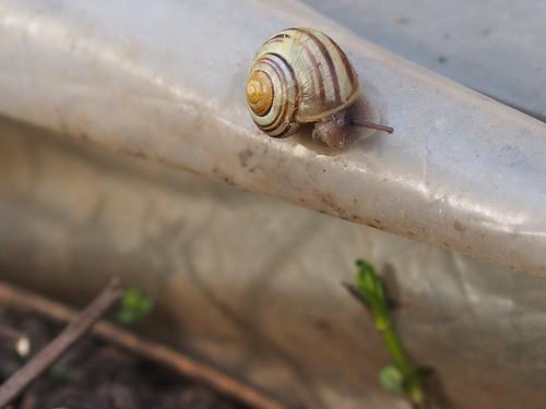portrait of snail with mint