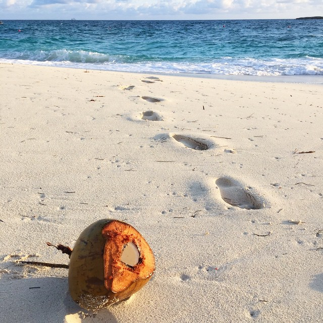 Opened my eyes after my sunrise meditation on the beach to find a coconut rolling around on the shore that wasn't there before. I debated scooping out some coconut to snack on but figured it would probably be a little too salty. 🌊