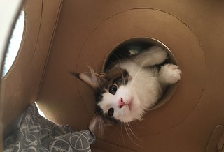 Oliver plays in the Catty Stacks tunnel