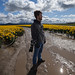 The Stoic Photographer Amongst the Daffodils by Dennis Valente