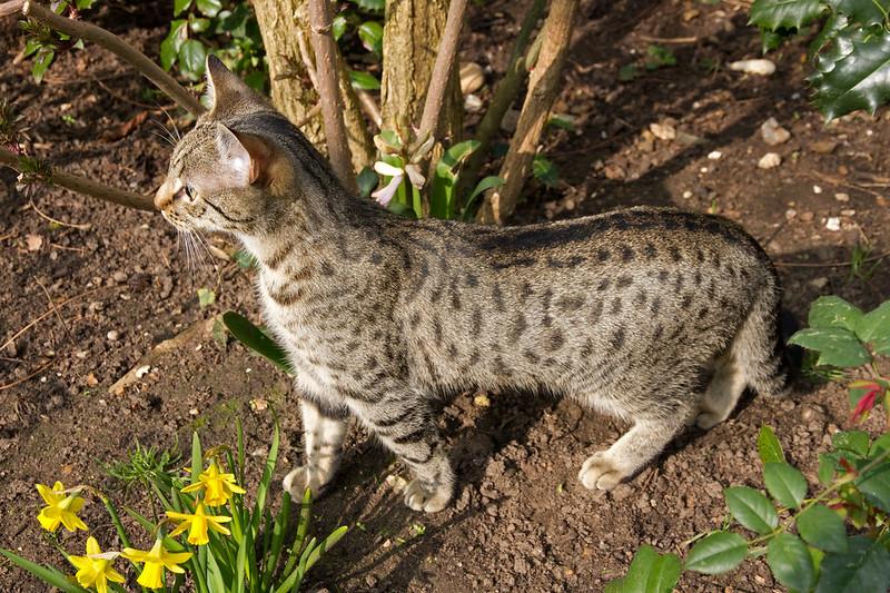 Gabriel in the garden  - alert