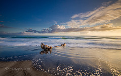 """muzzpix-nz posted a photo:Facebook      500px    WebsiteA flood must have washed this tree log with stump down some river into the sea to end up on the beach after a storm . Glad i wasn""""t in a little speed-boat when this was floating about . Sunrise at Bowentown end of Waihi Beach ."""