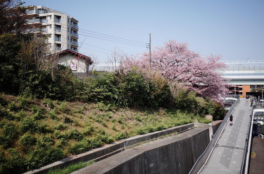 Eda Sakura GR