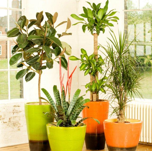 Lo dice la nasa estas son las plantas de interior que Plantas tropicales interior