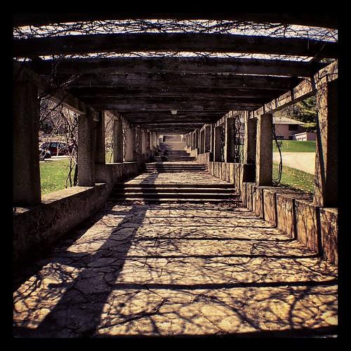 Veins #beauty #path #Wisconsin