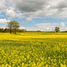 Sutton Cheney, Leicestershire by Iso Max Foto
