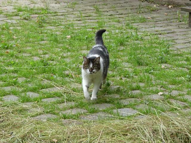 Zoo-Katze ;-)