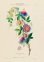 La Marie-gougeat Passiflora (1843-1846)