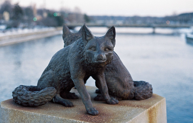 Foxes on the mighty Fox River