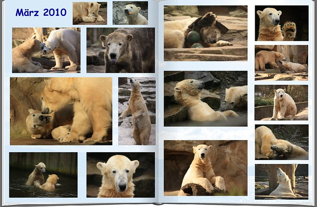 2010_03 Eisbär Knut