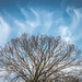 Tree-Cloud Convergence by HubbleColor {Zolt}