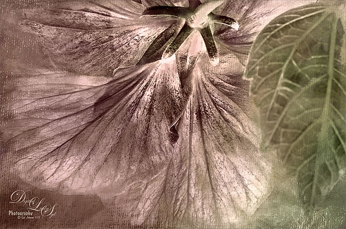 Image of a hibiscus from below