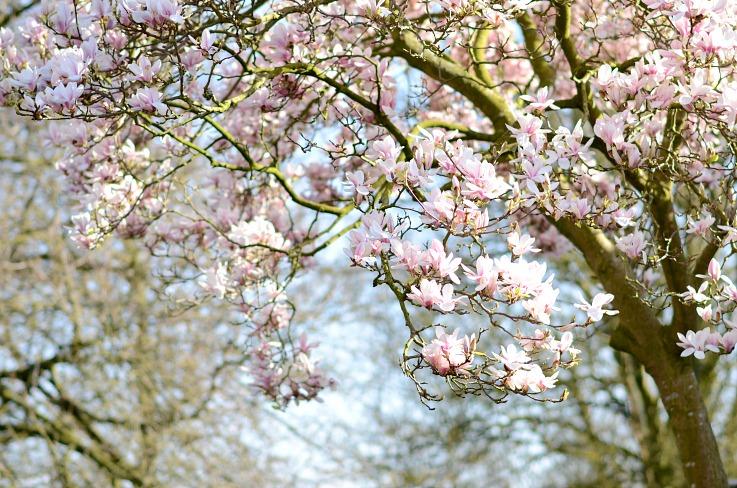 DSC_7787 Spring Floral Amsterdam