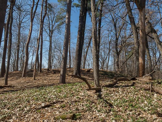 Wisconsin Woods in Spring