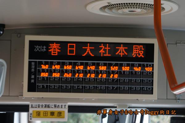 日本奈良公園東大寺12