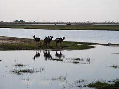 wetland, estuary, reservoir, water, river, loch, lake, natural environment, reflection, salt marsh,