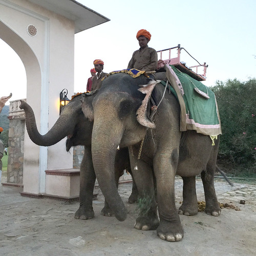 Elephant Rides Jaipur
