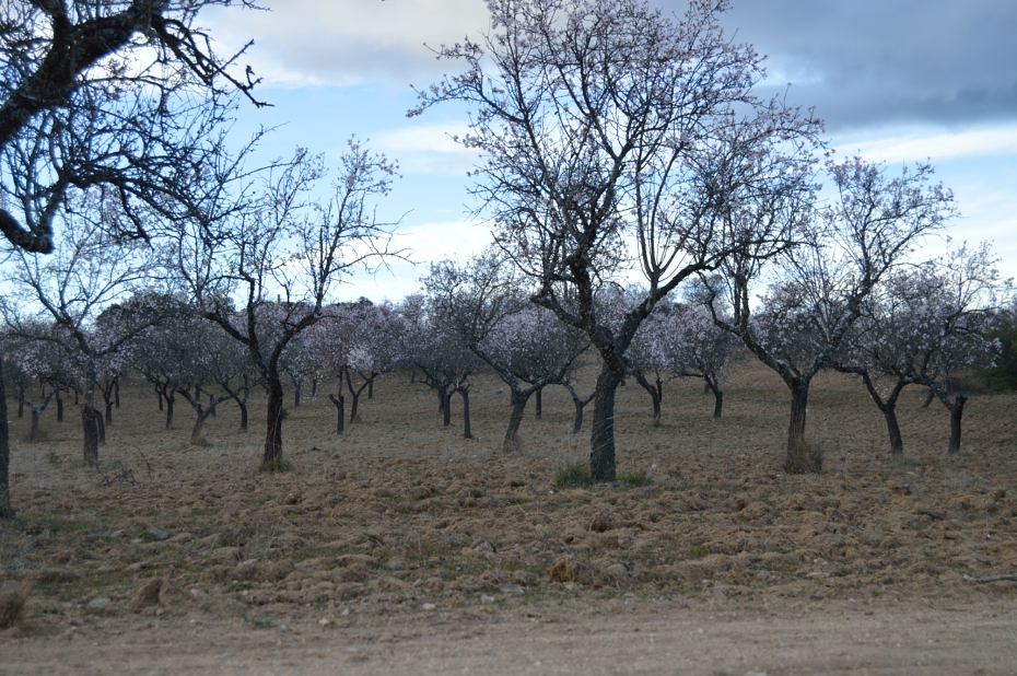 lara-vazquez-madlula-nature-countryside-almond-trees