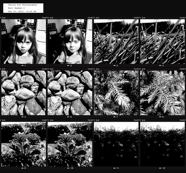 Contact Sheet 12 Exposures