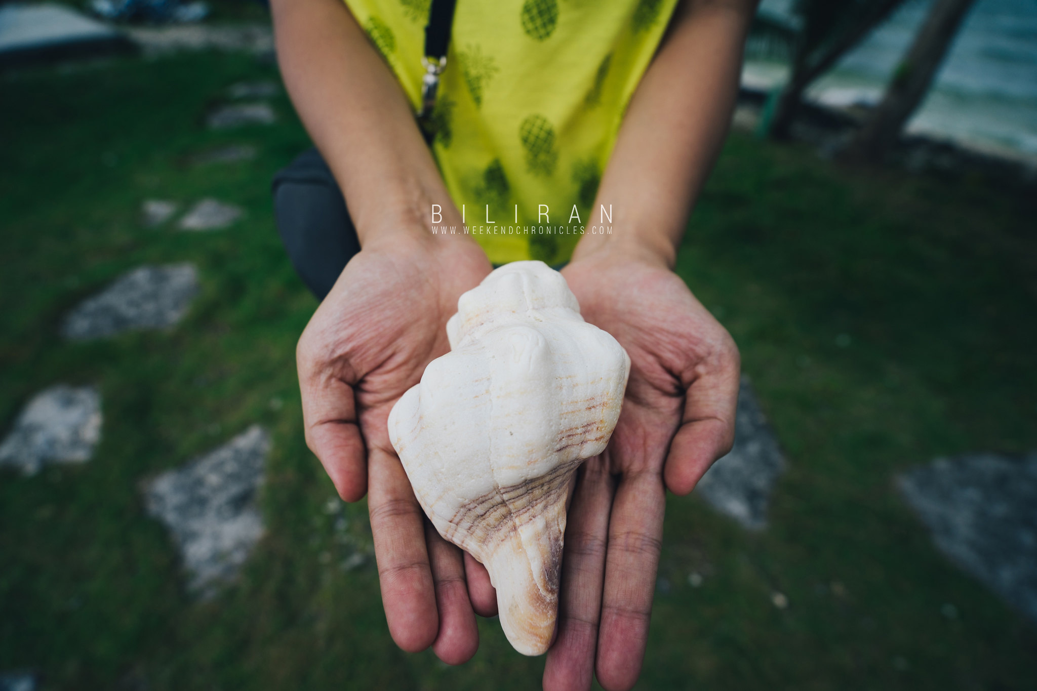 A seashell we found