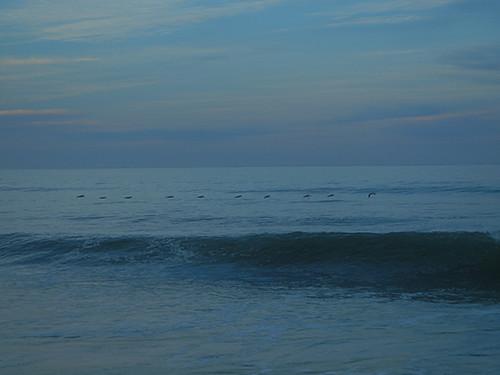 DSCN2155 Seascape Beach in Aptos, March 2015