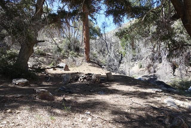 Shady campsite, m236