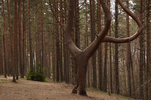 In the forest of Männiku, Nõmme, Estonia