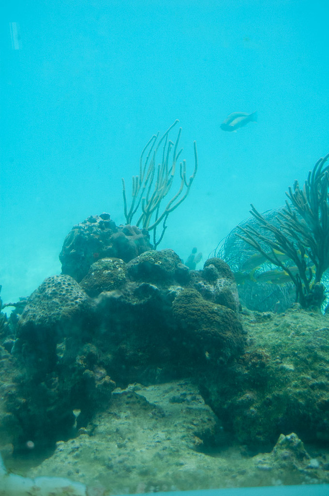 Viewing underwater life from Coral World in St. Thomas