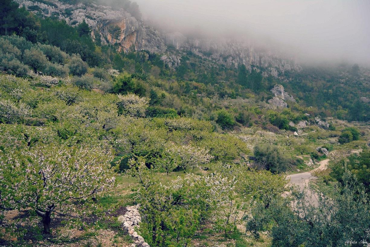 Valle de la Gallinera_Cerezos en Flor (4)