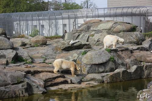 Zoo Berlin 26.04.20154
