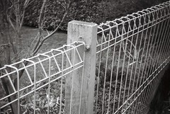 Fence in black-and-white