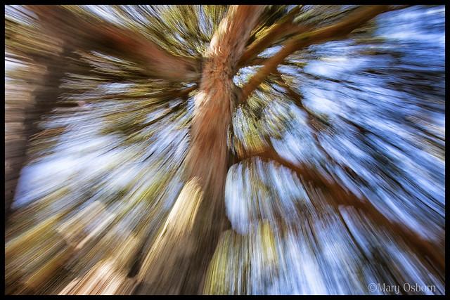 Zooming Tree
