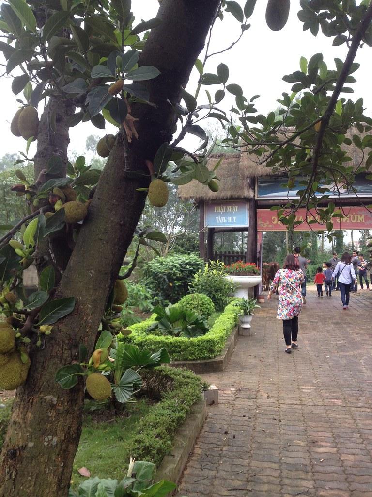 Co Phap Pagoda (18)