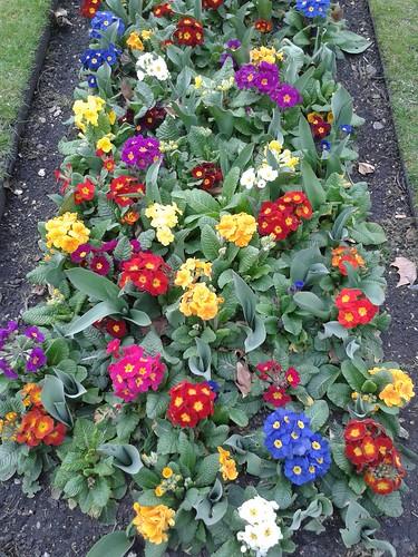 Paddington Garden