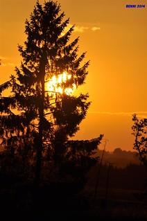 00284 tree sunset