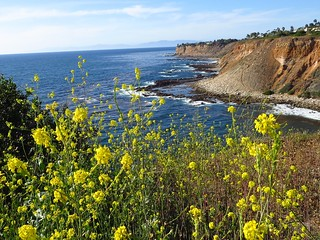point vicente wildflowers and coast