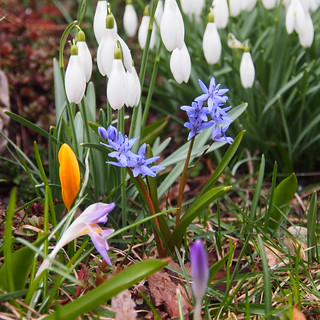 Colorful spring in my garden -