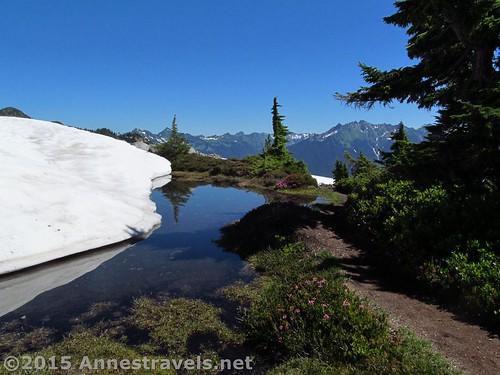 Snow meets snowmelt meets trail, atop Table Mountain, Mount Baker-Snoqualmie National Forest, Washington