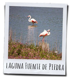 Het beschermde natuurgebied Fuente de Piedra is de grootste lagune in Andalusië