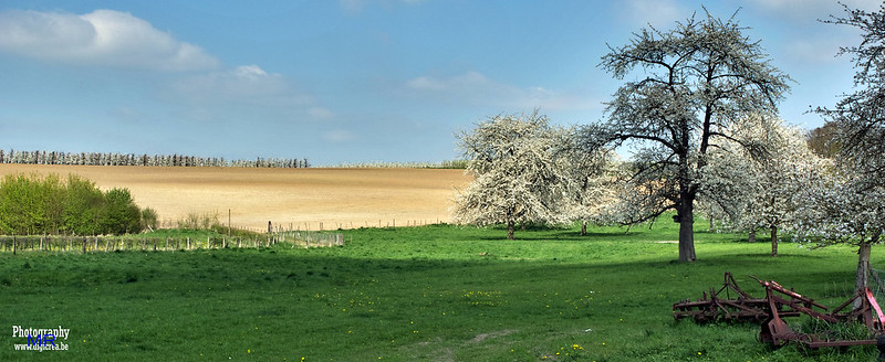 Blossom Trees @ Heers, Mettekoven