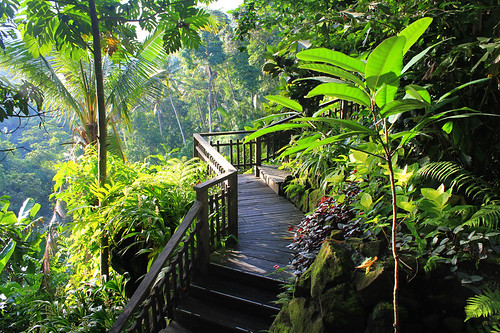 Bali Wellness Retreat (8)