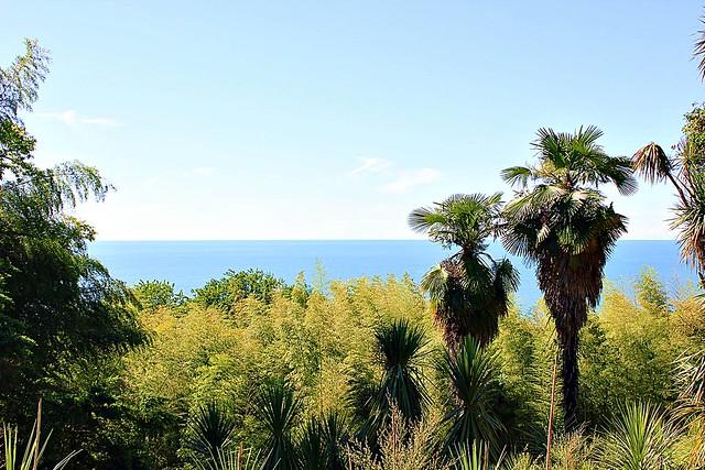 Georgische Palmen