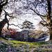 Castle Sakura