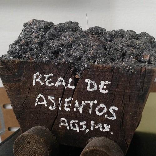 Aquí casual mi amigo el insecto dando un rol x las minas de Asientos Aguascalientes